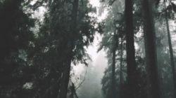 אין יערות בעולם השטוח
