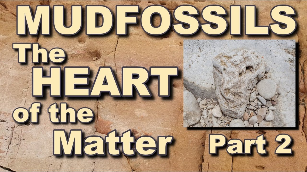 MUDFOSSILS -  The HEART of the Matter - Part 2