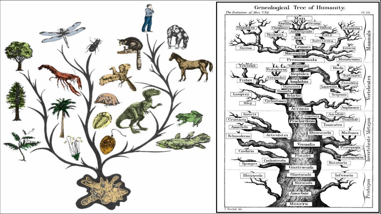 (FE) Evolution Is Fairy Tale! Modern Scientism Destroyed